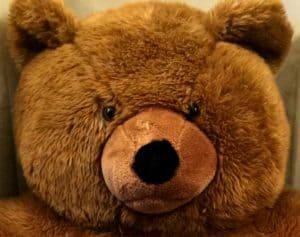 Angry Stuffed Bear Face